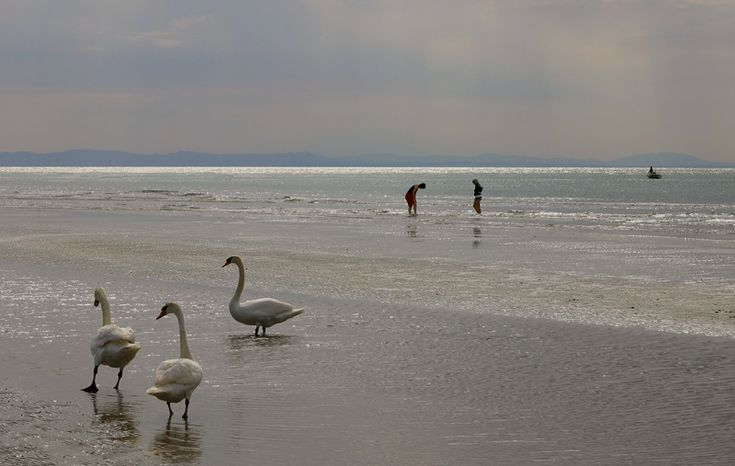 A very nice photo of the beach. #caorle and the #swans