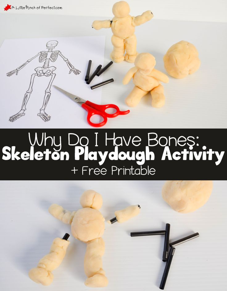 Learning About Bones Activities for Kids and Free Skeleton Printable