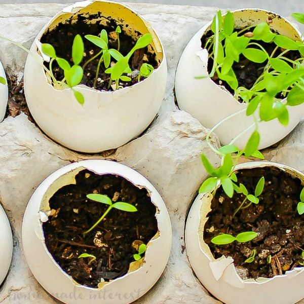 This is a sponsored post written by me on behalf of Green Works. All opinions are 100% mine. This simple Eggshell Herb Garden is a fun Earth Day Project to do with the kids! Spring is officially here! Did you know that April is Earth Month and April 22nd is Earth Day? My kids are …