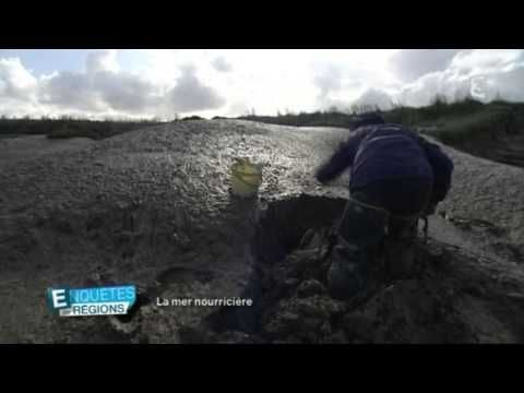 Reinette Michon, pêche à pied et verrotière en Baie de Somme  #michon #reinette #somme
