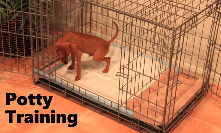 [SOUNDS GOOD]  Potty Training Puppy Apartment - Official Full Video - How To Potty Trai...