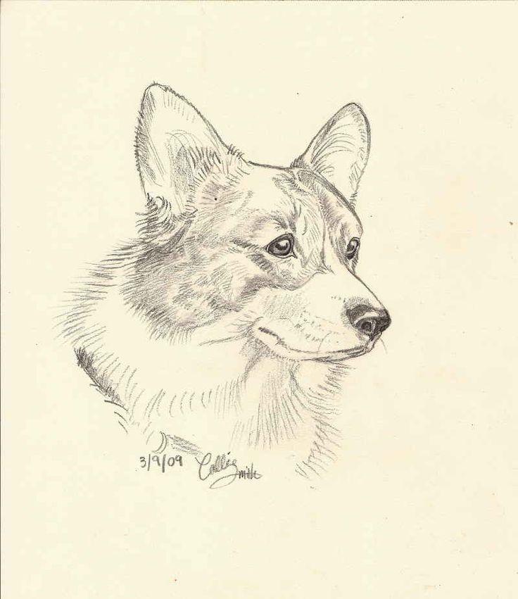 Pembroke Welsh Corgi Pencil Drawings on Pencil Sketches Of Cats