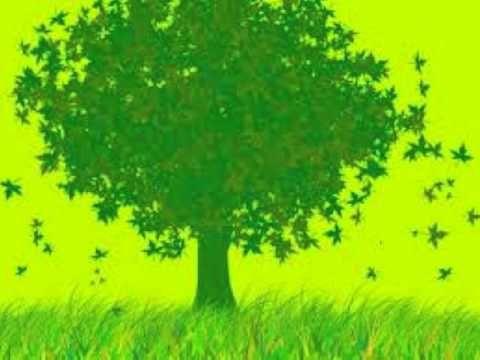 Resultado de imagen para cosas bonitas verdes