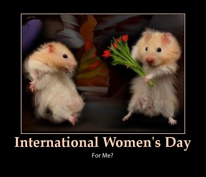 Funny International Women S Day Memes : Happy international women s day are like this