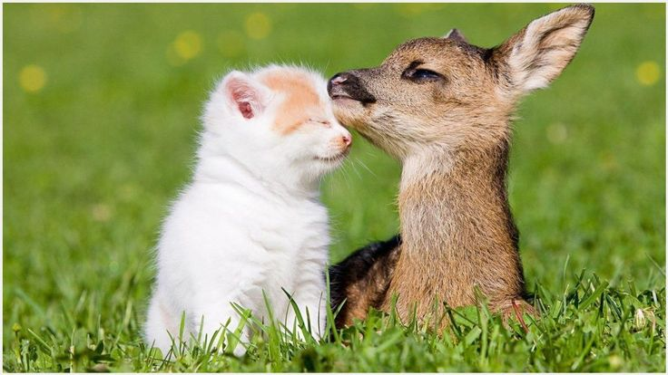 Baby Deer And Baby Kitten Wallpaper | baby deer and baby kitten wallpaper 1080p, baby deer and baby kitten wallpaper desktop, baby deer and baby kitten wallpaper hd, baby deer and baby kitten wallpaper iphone