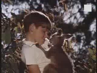 ▶ Generique : Skippy le kangourou - Vidéo Dailymotion