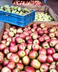 Mangold, Nüsse, Äpfel und dazu ein Kürbis