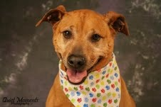 Who couldn't love that sweet face. He's been a K9 for over a year and needs a home. Let me tell you about him:)