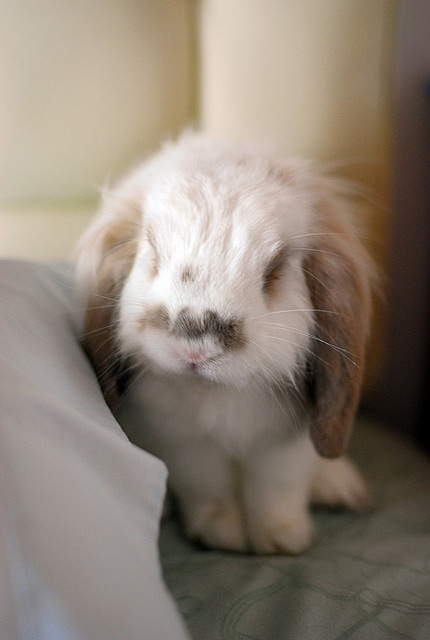 Who doesn't love a fluffy bunny!
