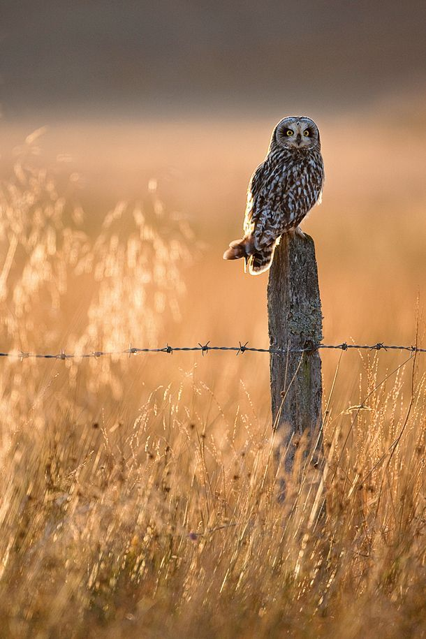 Wildlife photography made easy: simple secrets for getting close to animals | Digital Camera World