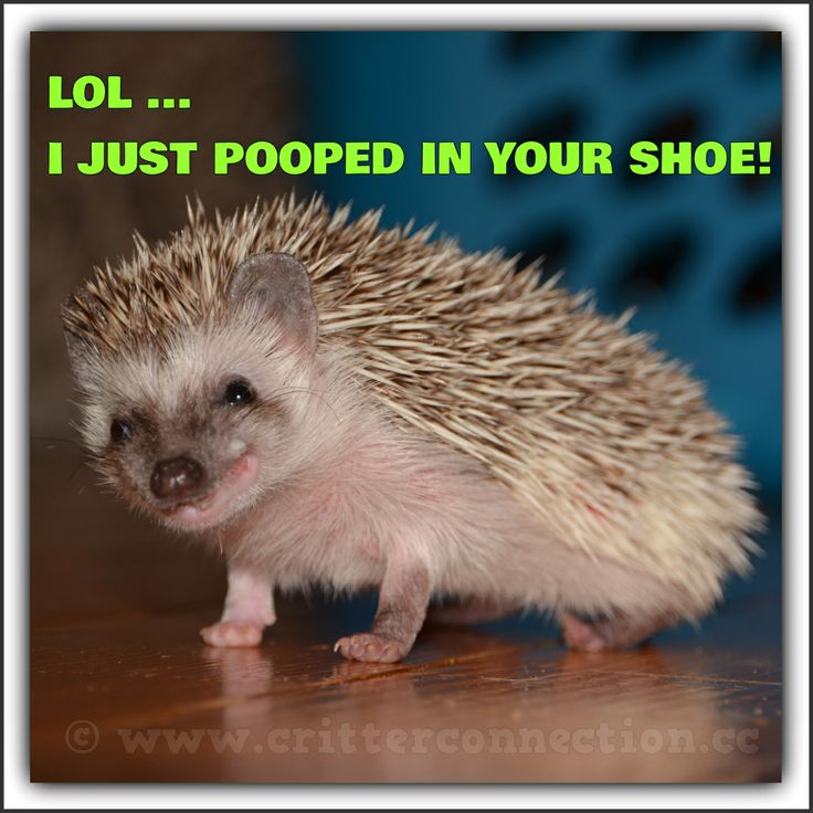 Lol...I just pooped in your shoe.
