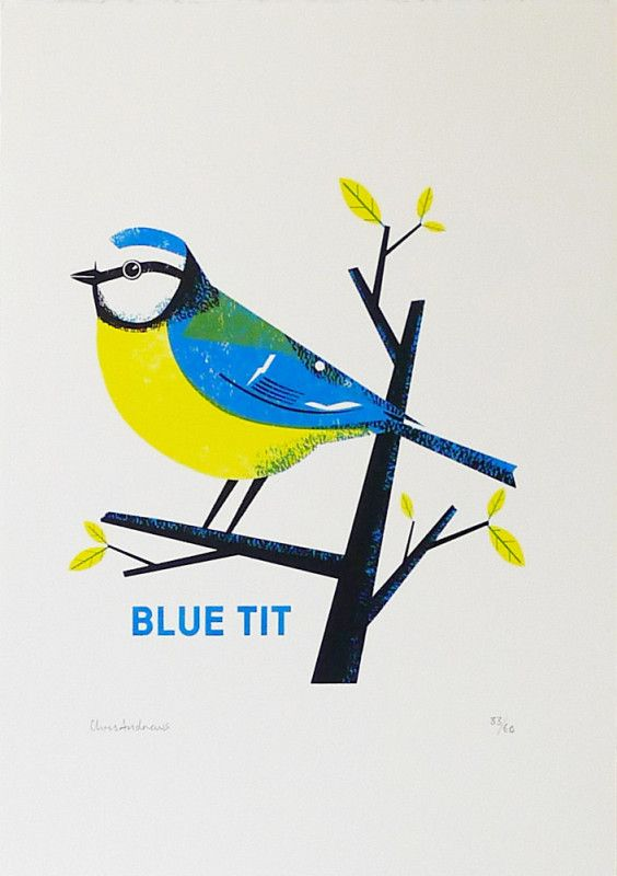 Chris-Andrews-Blue-Tit