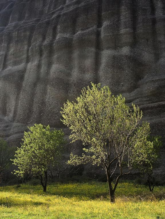 Trees set against the gigantic rock at Meteora, Thessaly, Greece