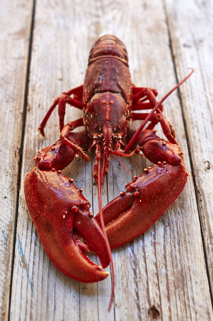How To Prep Lobster