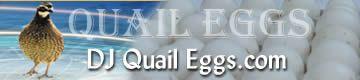 RAISING BOBWHITE QUAIL:    FROM EGG TO FLIGHT BIRDS Hatching Tips  http://www.djquaileggs.com/tips.html