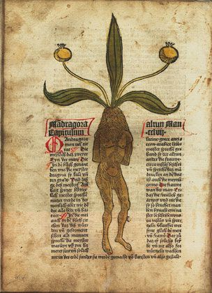 The Gart's health by 1485 is one of the first printed books on herbs and probably the most influential.