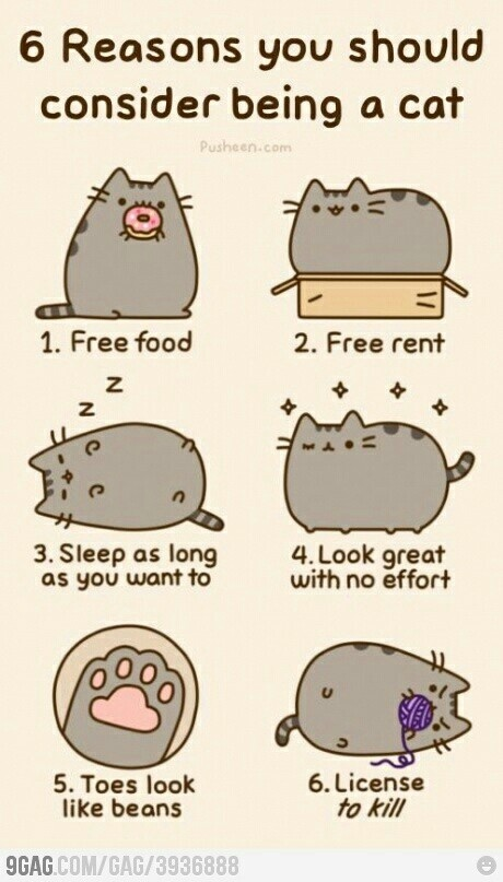 It's official: I shall become a cat.