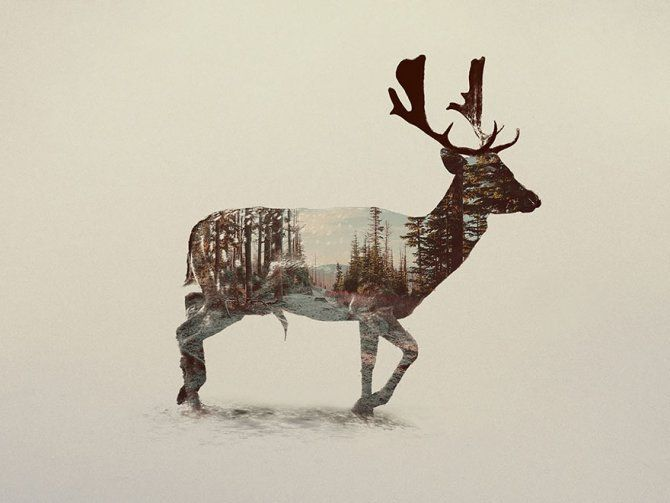 double exposure animal photography andreas lie 17 880