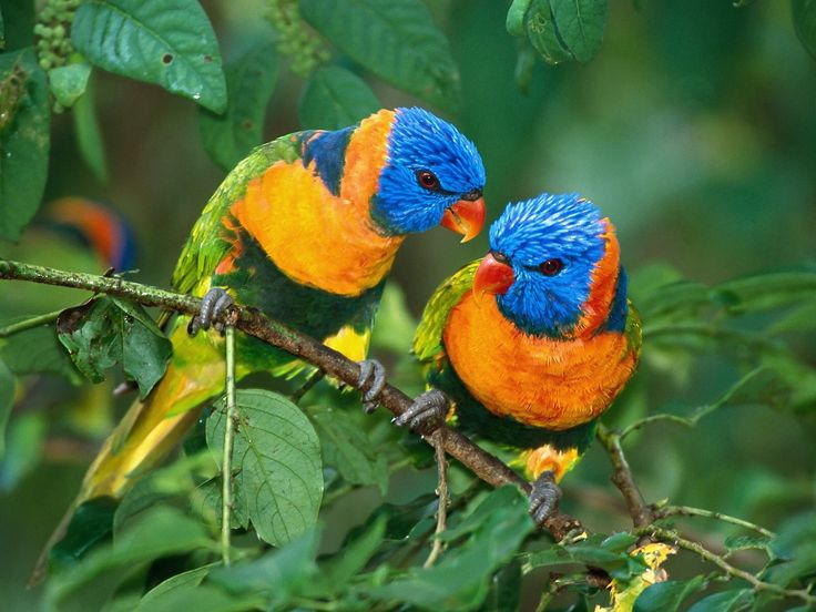 Bright colored birds