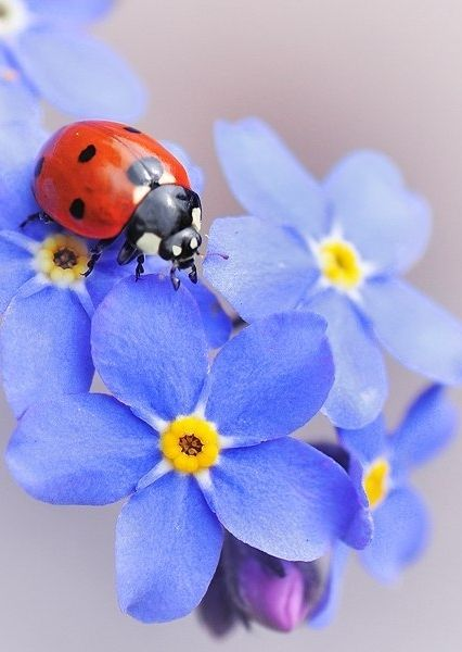 lady bugs bees flowers - photo #32