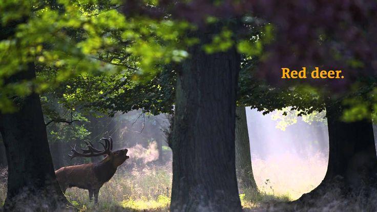 Rewilding Europe Trailer