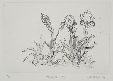 Jenny Phillips 'Minature Iris' - Etching on paper