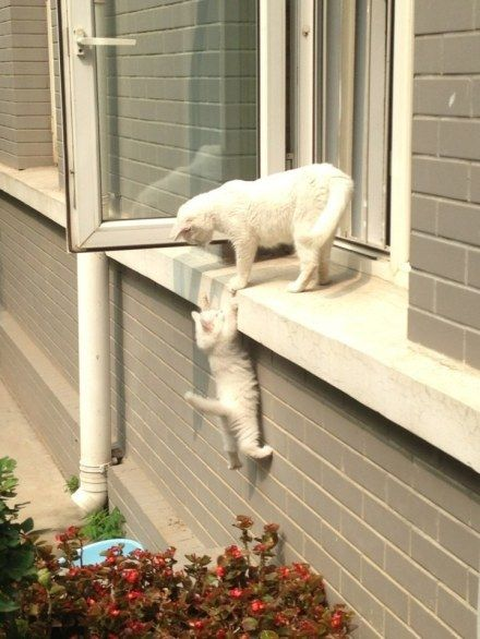 """Cat on Ledge: """"Give me your paw and always remember: When a mountain stands before you; I will be there to help you climb it..."""""""