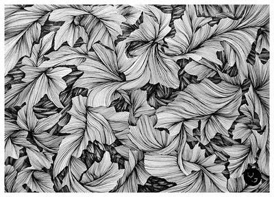 Black And White Line Drawing Flower : Use simple shapes for realistic pencil drawings of flowers