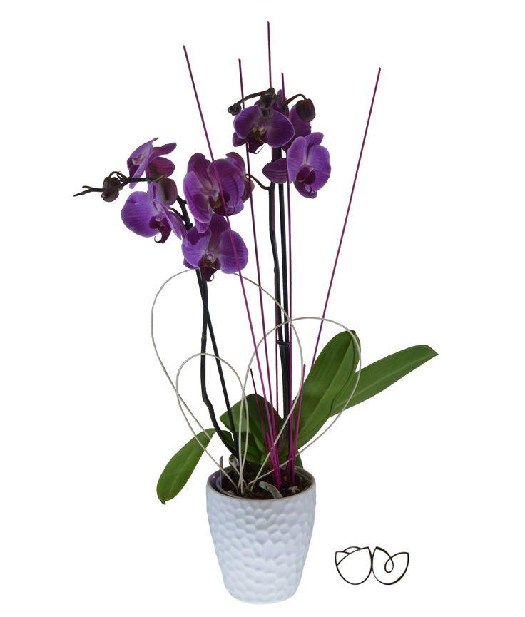 *Planta Orquídea Morada* La Phalaenopsis comúnmente conocida como Orquídea es una planta alargada extremadamente bella. Regala vida, regala una planta.