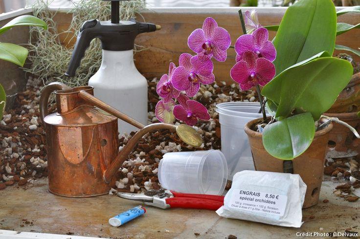 Le matériel nécessaire à l'entretien des orchidées
