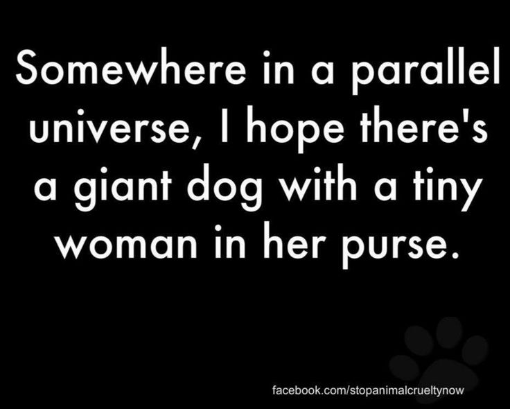 dog funnyGiant Dogs, Paris Hilton, Dogs Humor, Parallel Universe, Dog Funnies, Dog Humor, Heee, Dogs Funny, Big Dogs