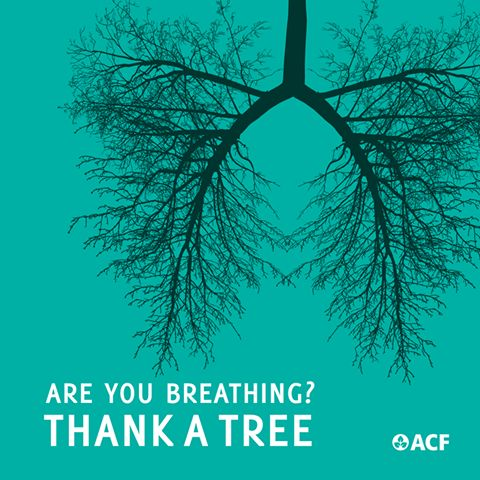 Thank a tree!