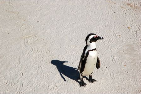 A woman from Amersham, Gail Mold, won a Heart FM radio competition to name a new baby penguin at the London Zoo - she called it Heartley.