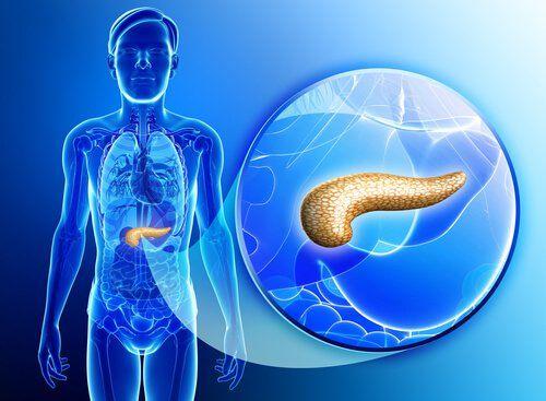 El páncreas es un órgano-glándula al que no solemos prestar atención, a menos que nos duela o moleste.