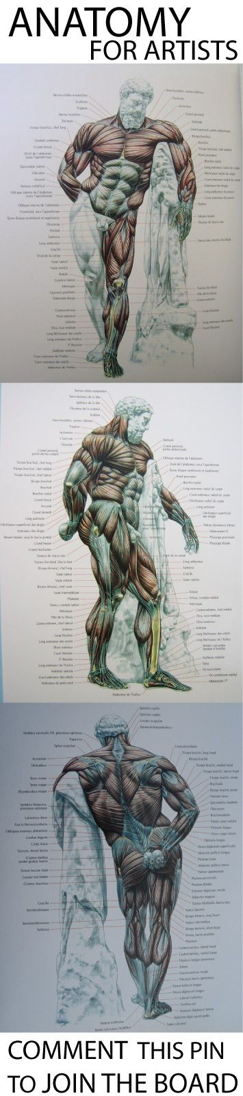 hi I made a new board anatomy & tutorials for artists. comment this pin to be added to the board. have a nice day join us http://pinterest.com/koztar/cg-anatomy-tutorials-for-artists/