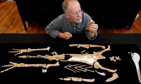 Giant prehistoric penguin is reconstructed in New Zealand