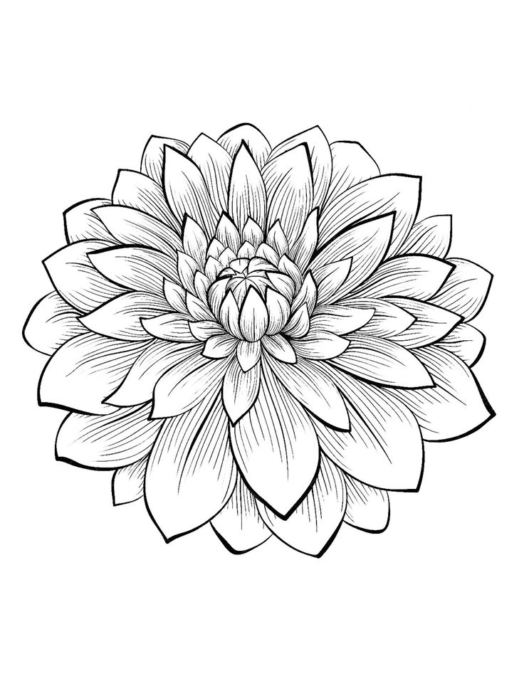 1 Dahlias to print & color, From the gallery : Flowers And Vegetation