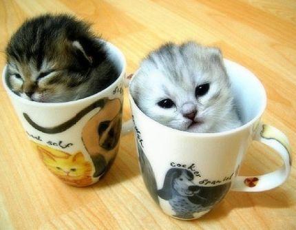 Bir Kedi Neleri Niçin Sever..? (Kendisi Anlatıyor..!!!)
