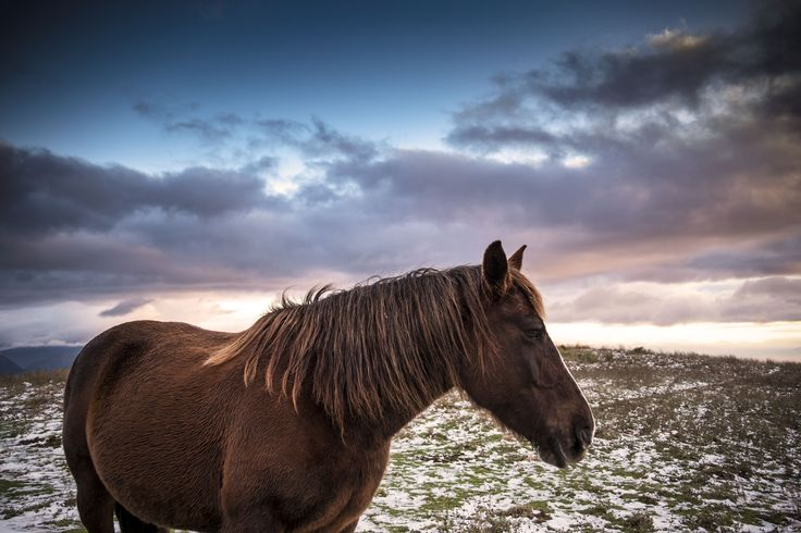 #horses #montagna #natgeo #spello #umbria #italy #snow