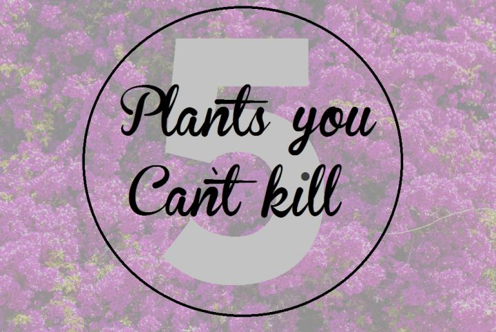 5 Pretty plants you just cant kill