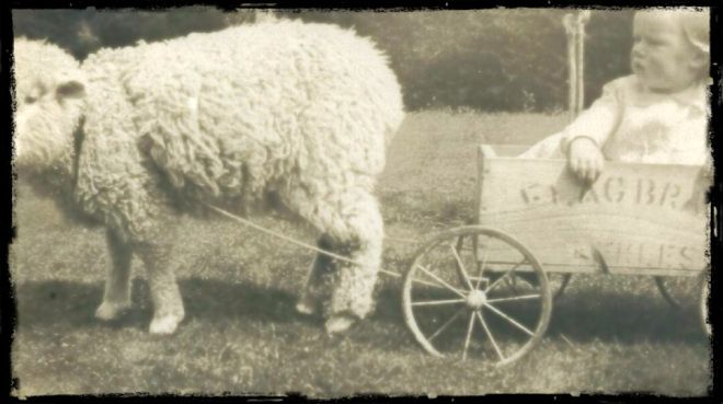 The Big T's aunt Dorothy Dove, with pet lamb. Dove family farm, Southland, NZ. c. 1937. Photo: Dove-Gray family archive.
