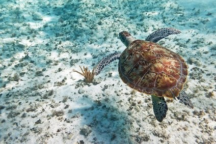 How would you feel if you came across this little guy, while snorkeling in the crystal clear waters of Antigua?