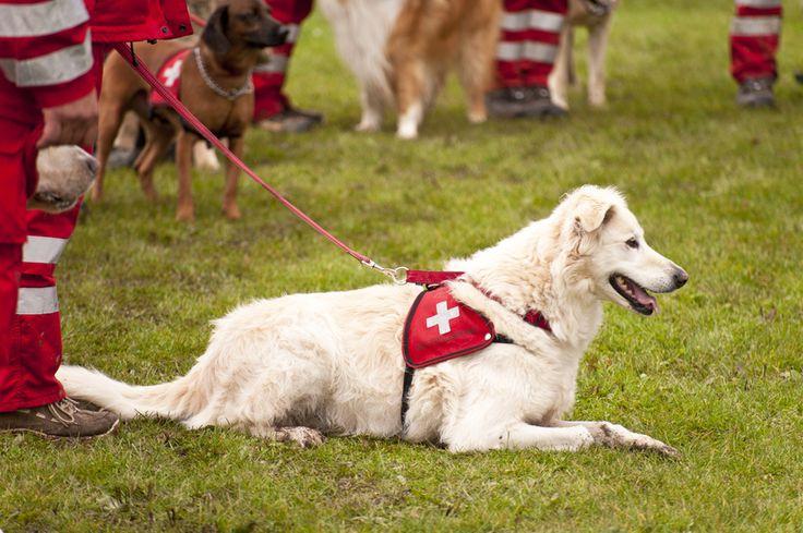 Métiers animaliers : Formateur de chiens d'assistance