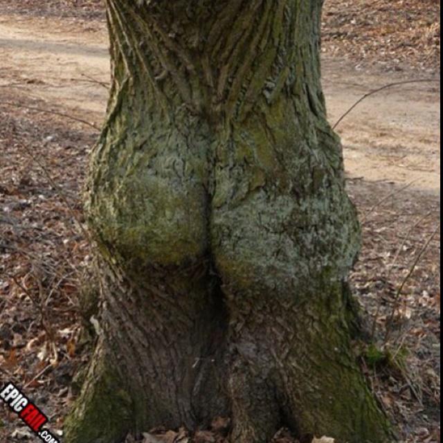 Interesting tree..