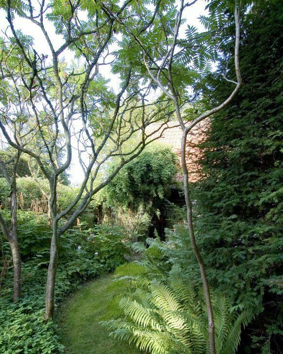 Inte bara stora träd fungerar för att bilda tak. Några uppstammade rönnsumaker, Rhus typhina, bildar ett glest, exotiskt tak över gräsgång och marktäckare hemma i trädgården hos hus- och trädgårdsarkitekten Per Friberg i Bjärred, Skåne.