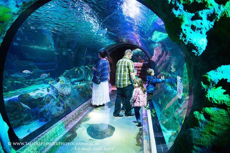 Fort Worth Texas Aquarium Nature Landscape Macro