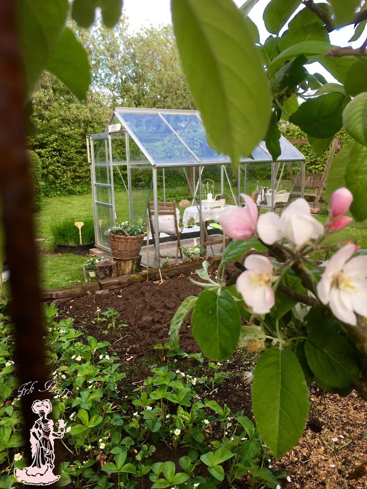 My lovely romantic shabby chic greenhouse or garden shed in my beautiful garden