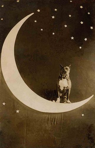 Dog in a paper moon   |   Libby Hall via Flickr