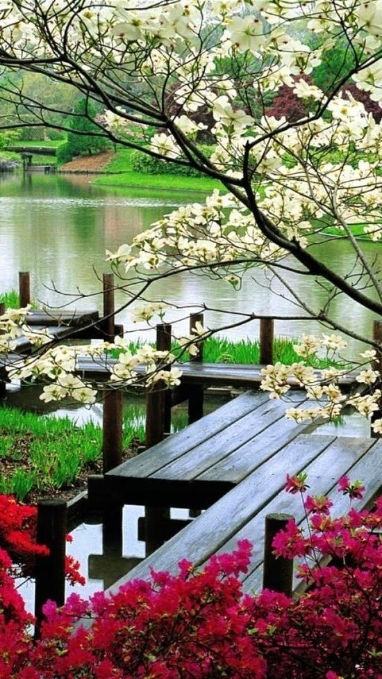 A beautiful lake with blooming trees and a nice deck
