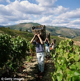 Drink in the view: Behind the wine country along Portugal's stunning Douro river - via Daily Mail 23.09.2015 | The grapes are grown upriver, among the remote and beautiful schist terraces of the Douro Valley